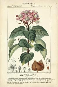 Botanique Study in Pink I by Turpin