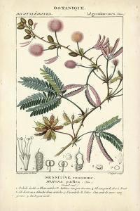 Botanique Study in Pink IV by Turpin
