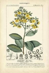 Botanique Study in Yellow II by Turpin