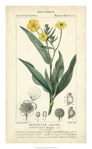 Botanique Study in Yellow III by Turpin