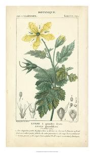 Botanique Study in Yellow IV by Turpin