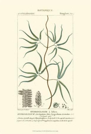 https://imgc.artprintimages.com/img/print/turpin-botany-ii_u-l-f31u430.jpg?p=0