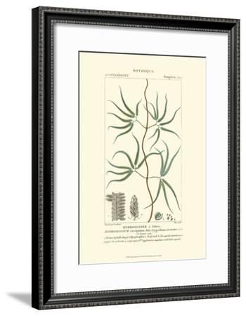 Turpin Botany II-Turpin-Framed Art Print