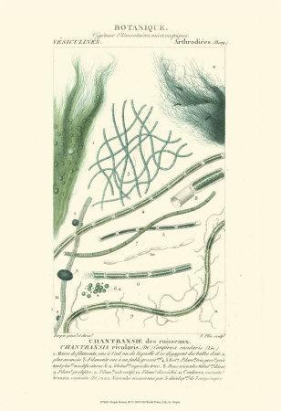 https://imgc.artprintimages.com/img/print/turpin-botany-iii_u-l-f31u440.jpg?p=0