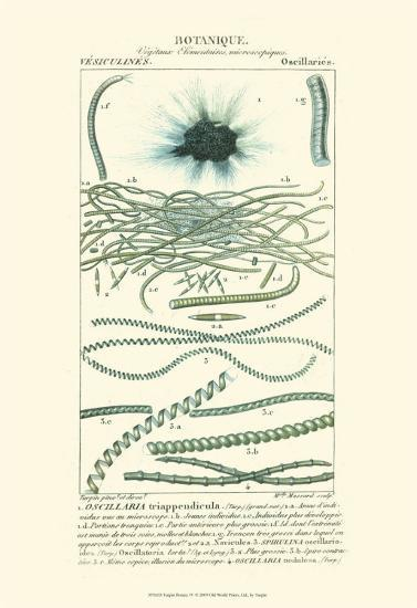 Turpin Botany IV-Turpin-Art Print
