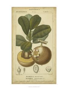 Exotic Botanica II by Turpin