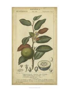 Exotic Botanica III by Turpin
