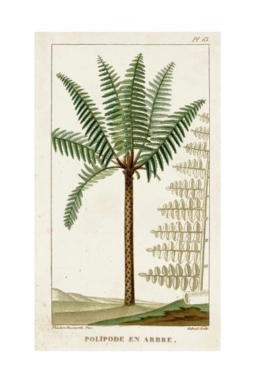 Turpin Exotic Palms III--Art Print