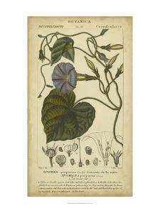 Floral Botanica I by Turpin