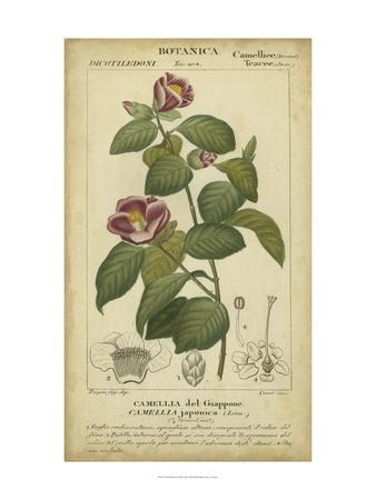 Floral Botanica III