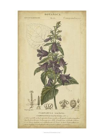 Floral Botanica IV
