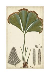 Foliage Botanique I by Turpin