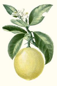 Turpin Fruit I