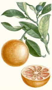 Turpin Fruit II