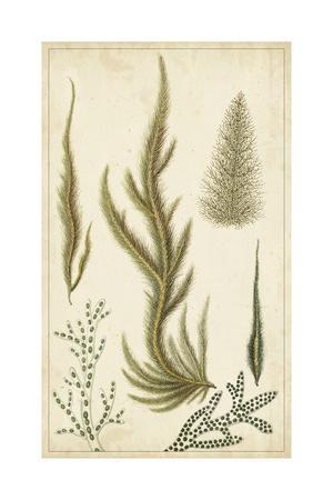 https://imgc.artprintimages.com/img/print/turpin-seaweed-iv_u-l-pwa0r60.jpg?p=0