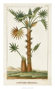 Turpin Exotic Palms I by Turpin
