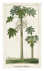 Turpin Exotic Palms II by Turpin
