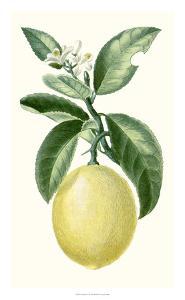 Turpin Fruit I by Turpin