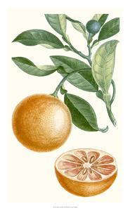 Turpin Fruit II by Turpin