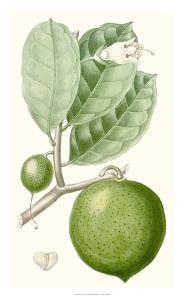 Turpin Fruit III by Turpin
