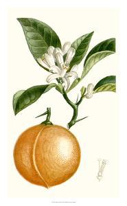 Turpin Fruit IV by Turpin