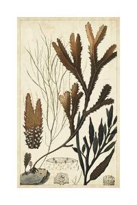 Turpin Seaweed I by Turpin