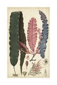 Turpin Seaweed II by Turpin