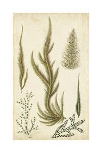 Turpin Seaweed IV by Turpin