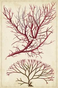 Turpin Seaweed V by Turpin