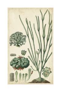 Turpin Seaweed VI by Turpin
