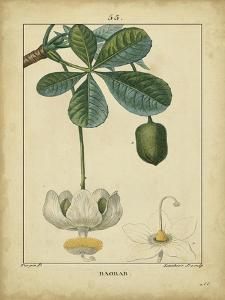 Vintage Turpin Botanical II by Turpin