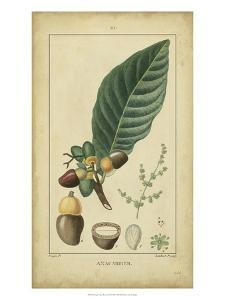 Vintage Turpin Botanical IV by Turpin