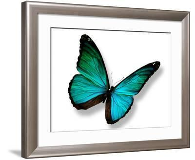 Turquoise Butterfly-suns_luck-Framed Photographic Print