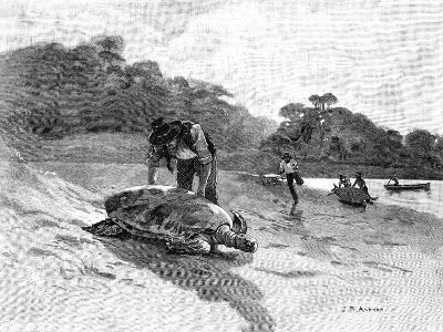 Turtle Catching, 1886-Julian Ashton-Giclee Print