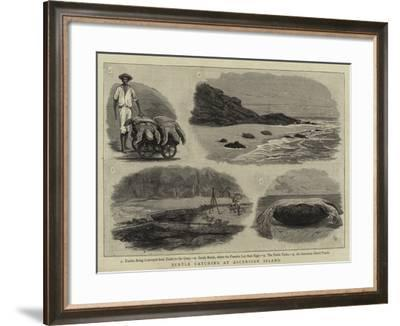 Turtle Catching at Ascension Island--Framed Giclee Print