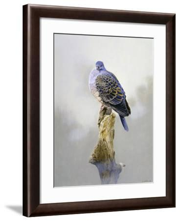 Turtle Dove-Joh Naito-Framed Giclee Print