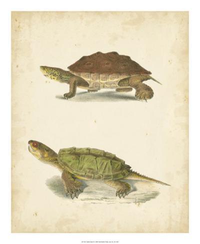 Turtle Duo II-J^W^ Hill-Giclee Print