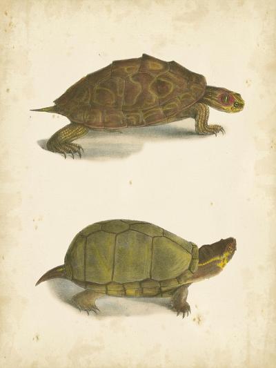 Turtle Duo IV-J^W^ Hill-Art Print