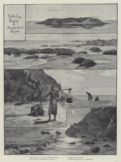 Turtle Egg Digging at Diamond Island--Giclee Print