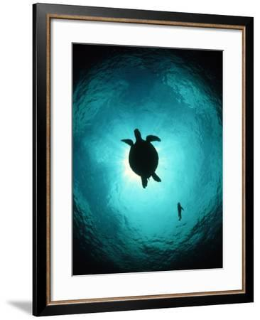 Turtle Swimming-Matthew Oldfield-Framed Photographic Print