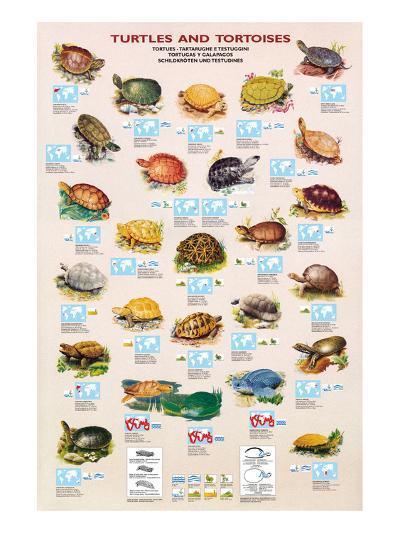 Turtles and Tortoises--Art Print