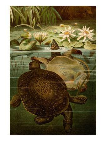 https://imgc.artprintimages.com/img/print/turtles_u-l-pgfwq70.jpg?p=0