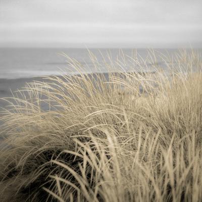 Tuscan Dunes #2A-Alan Blaustein-Photographic Print