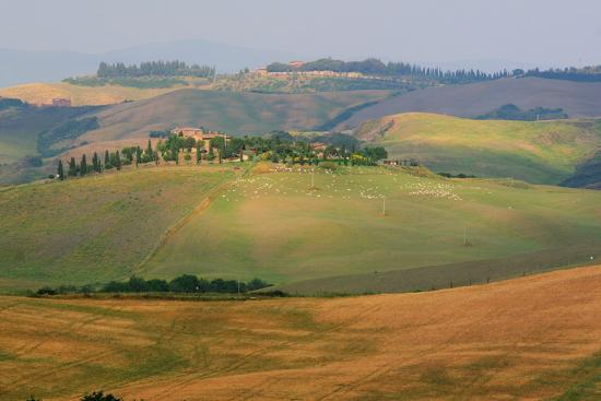 Tuscan Hill Sheep-Robert Goldwitz-Photographic Print
