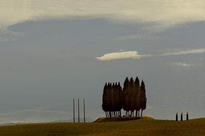 Tuscan Pines-Valda Bailey-Photographic Print