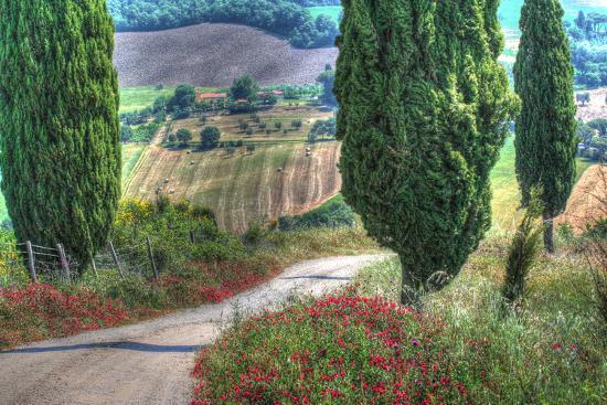 Tuscan Red Flower Road-Robert Goldwitz-Photographic Print