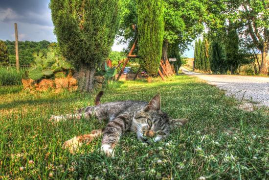 Tuscan Sleepy Cat-Robert Goldwitz-Photographic Print