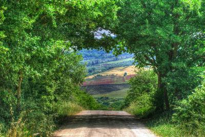 Tuscan Tree Tunnel-Robert Goldwitz-Photographic Print