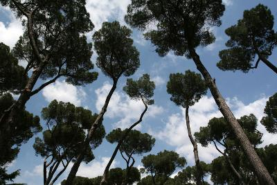 Tuscan Trees Clouds-Robert Goldwitz-Photographic Print