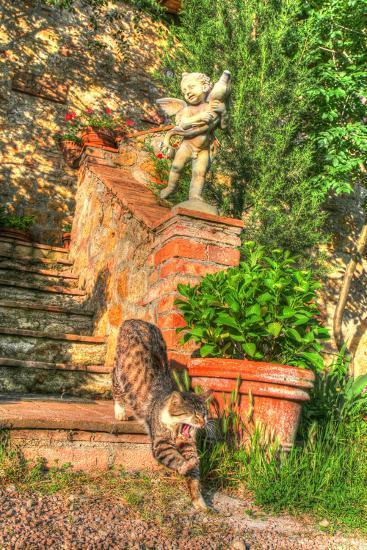 Tuscan Vertical Cat on Stairs-Robert Goldwitz-Photographic Print
